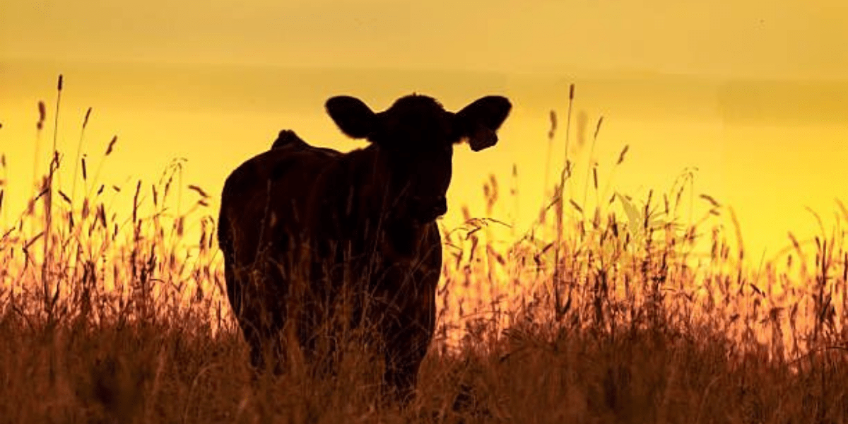 """""""Pastoreo es el encuentro de las vacas con el pasto"""" André Voisin"""